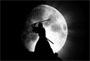 samourai.jpg